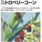 トウモロコシの種 ストロベリーコーン (鑑賞用) 約5ml