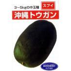 冬瓜(トウガン)の種 沖縄冬瓜 小袋 約5ml