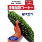 ニガウリ、ゴーヤの種 沖縄願寿ゴーヤー 10ml