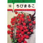 ミニトマトの種 ミニトマト ちびまるこ 30粒 ( 野菜の種 )