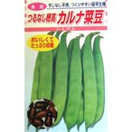 つるありインゲン豆の種 カルナ菜豆 30ml