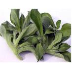 アイスプラント プチサラの種 ペレット1千粒 ( 野菜の種 )