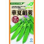 きぬさやエンドウの種 華夏絹莢 30ml