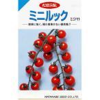 ミニトマトの種 ミニルック 29粒 ( 野菜の種 )