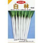 ネギの種 白林 (はくりん) 小袋 約20ml ( 野菜の種 )