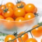 ミニトマトの種  オレンジキャロル  ペレット約13粒 ( 野菜の種 )