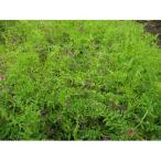 農業資材 緑肥の種子 ヘアリーベッチ まめ助 ( 雪印種苗 ) 1kg 土づくり 土壌改良におすすめの資材♪