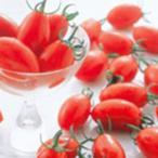 ミニトマトの種  アイコ  実咲小袋(17粒) ( 野菜の種 )