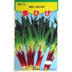 ネギの種 赤ひげ 小袋 約10ml ( 野菜の種 )