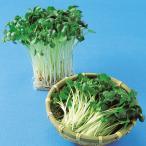 スプラウトの種 かいわれ大根の種 1L