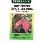 唐辛子の種 ジョロキア 小袋