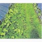 マルチ大麦百万石 (大麦の種) 1kg