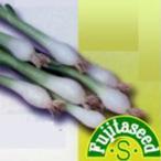 エシャロットの種 ホワイトシャロット 小袋