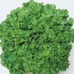 レタスの種 グリーンジャケット ペレット5千粒