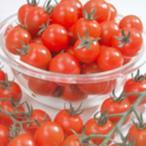 ミニトマトの種  ミニキャロル  実咲小袋 ( 野菜の種 )