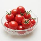 ミニトマトの種 ルビーラッシュ 100粒 ( 野菜の種 )