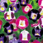 カラフルでかわいい花
