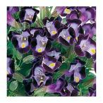 淡青色に濃紫色の覆輪です。