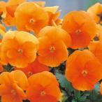 パンジー 種 F1 ナチュレ トゥルーオレンジ 小袋 ( パンジーの種 )