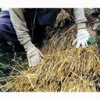農業資材 敷きわら 販売 万能の天然マルチ 敷ワラ 家庭菜園 ガーデニングにおすすめの資材♪