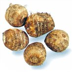 里芋(さといも) 予約 石川早生 種芋 500g(7〜10個入り)