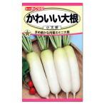 トーホク かわいい大根 小太郎 種  家庭菜園 プランター栽培 だいこん たね 野菜 ダイコンのタネ メール便対応