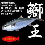 【水産物応援商品】鰤王 丸(ラウンド)(商品コードSU00005)