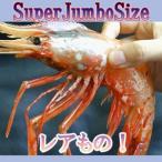 Shrimp - ぼたんえび・SPサイズ 500g(7〜8尾前後)