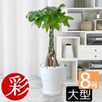 観葉植物 選べる8号 ブラックラウンドポット