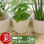 『ミニ観葉植物 セット・ブリキポットの3つのセット♪』送料無料 ガジュマル・パキラ・ネムノキ 人気