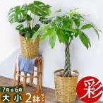 送料無料 観葉植物 大型 6号+7号 鉢カバー付 セット モンステラ サンスベリア パキラ