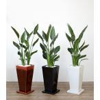 送料無料 ストレリチア・レギネ 選べる3色シンプルなスクエア陶器 観葉植物
