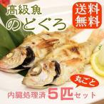 海鮮 のどぐろ 話題の高級魚 1尾80-100g 小サイズ 5匹セット ウロコ・内臓処理済み ノドグロ のど黒 喉黒 赤むつ 赤ムツ あかむつ 海鮮 送料無料
