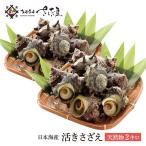 海鮮 BBQセット バーベキューセット 日本海産 天然活さざえ 2kg 14〜26個 ガンガン焼き にもオススメ♪【冷蔵便】