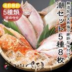 潮セット(5種8枚)カレイ,イカ,レンコ鯛,サンマ,サーモン(干物詰め合わせ)