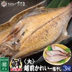 鰈魚 - 越前カレイ干物 大サイズ3尾入り お中元