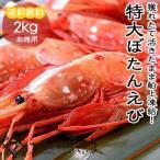 天然ジャンボぼたんえび 2kg 特大サイズ 28〜32尾 生食可【冷凍便】
