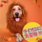 たてがみ コスチューム ライオン CM ハロウィン 仮装 コスプレ 帽子 猫 小型犬 小動物 大型犬 かわいい ク