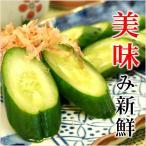 きゅうりわさび漬|胡瓜 漬物 漬け物 新鮮で上品なあっさり風味 秘伝のうま味だし漬け