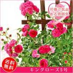 ショッピングバラ キングローズ 5号|母の日ギフト プレゼント 薔薇 バラ 鉢花(鉢植え) 贈り物