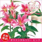 オリエンタルリリー ピンク 6号|母の日ギフト プレゼント 百合 ユリ 鉢花(鉢植え) 贈り物