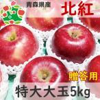 りんご 贈答 大玉 青森県産 北紅 特選 特大大玉 5kg