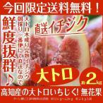 其它 - 完熟イチジク約1.5−2kg入 高知産の大トロいちじく無花果 北海道、沖縄県とその他の離島は発送不可