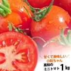 送料無料 プチトマト約1kg 高知のミニトマト 沖縄県と北海道と離島は、別途1000円配送料がかかります。