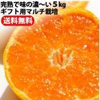 山北みかんギフト用マルチ栽培ミカン5kg最高級みかん 沖縄県と離島は、別途1000円配送料がかかります。