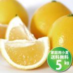 小夏  5kg ご家庭用 高知産土佐小夏 日向夏 ニューサマーオレンジ