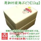 常 沖縄県産恩納村産海ぶどう 1kg(500g×2)(送料込) *産直商品のため同梱不可