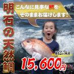 明石の天然鯛2,5kg お祝いお食い初めに 大きさ見た目もまさに王者の風格です。