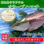 特大サイズ 香川県産 オリーブハマチ4kg以上の大物 [三枚おろし]