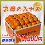 香川県の最高峰クラスのみかん!吉田さんの特選品の温州みかん10kg 曽保みかんお歳暮